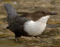 la Vesle et ses oiseaux,  photo : Claude Ruchet, http://www.ruchet.com/